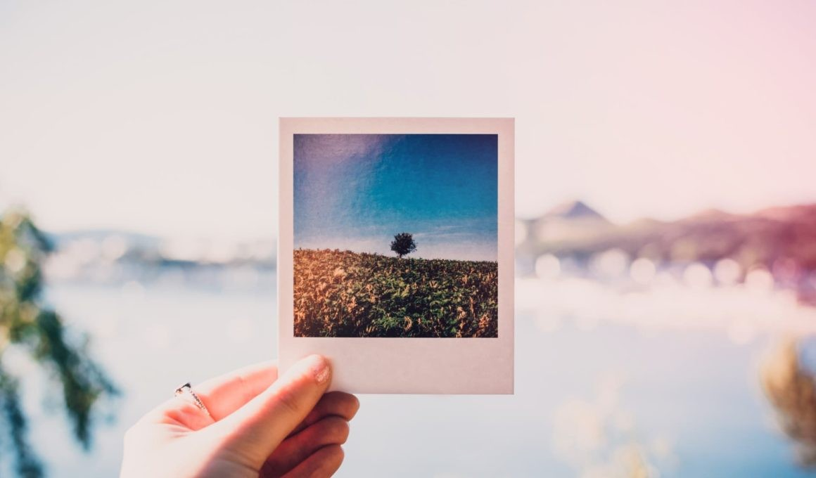 person holding photo of single tree at daytime 1252983 1